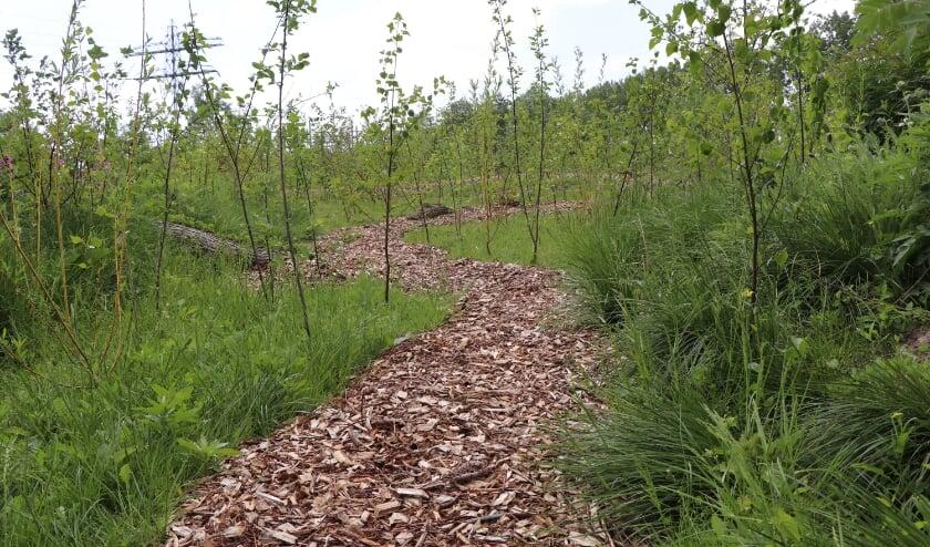 <p>Een voorbeeld van een Tiny Forest.&nbsp;</p>