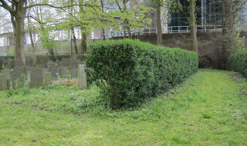 Onder deze heg op de Oude Begraafplaats aan de Vorstmansstraat liggen 59 Gouwenaars anoniem begraven. Dat gaat veranderen. Foto: PR