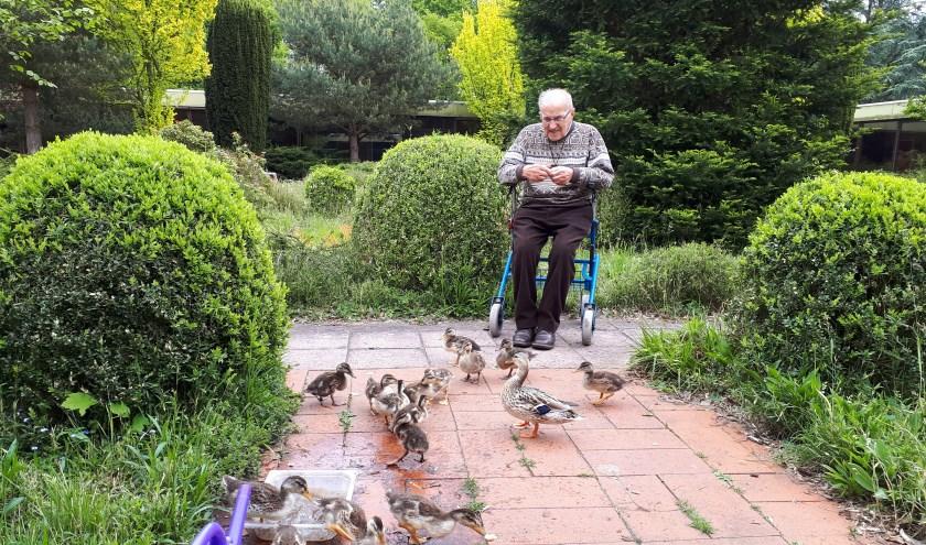 Frater Willibrordus in de binnentuin van het Fraterhuis waar hij de eendenfamilie brood voert. FOTO: Julie Houben