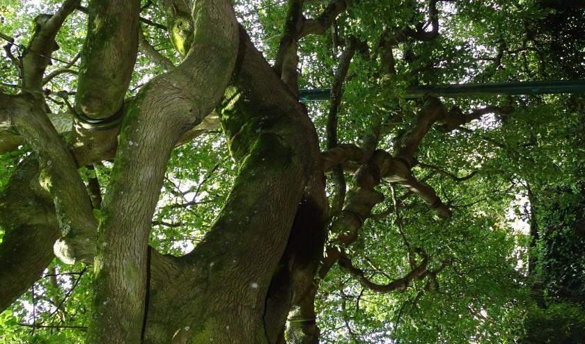 Bomenwandeling over de Heeswijkse Heuvel.