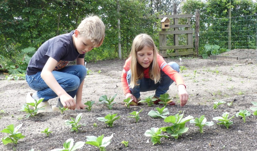 Kinderen aan het werk tijdens de open dag op complex De Bovenhoek van de volkstuinvereniging de VAT.