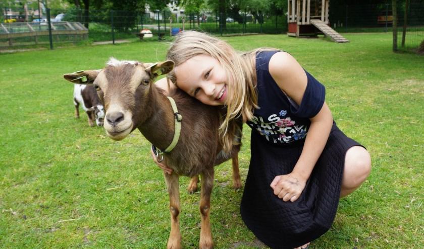 De geit heet Marly, ze is de  lievelingsgeit van Ilse (10).