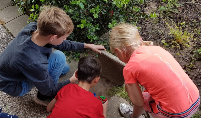 De leerlingen gaan onder leiding van professionals en amateurs aan de slag in de natuur tijdens Educatie op Locatie. De Kerkewei, de Kingschool en de Willibrordusschool krijgen dit schooljaar nog pilotlessen.