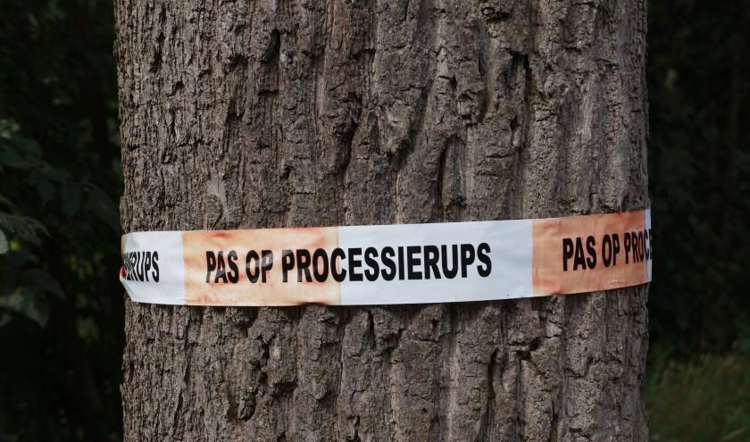 Het Babberichse bos is per direct gesloten voor publiek vanwege de aanwezigheid van de eikenprocessierups. (foto: Shutterstock.com)