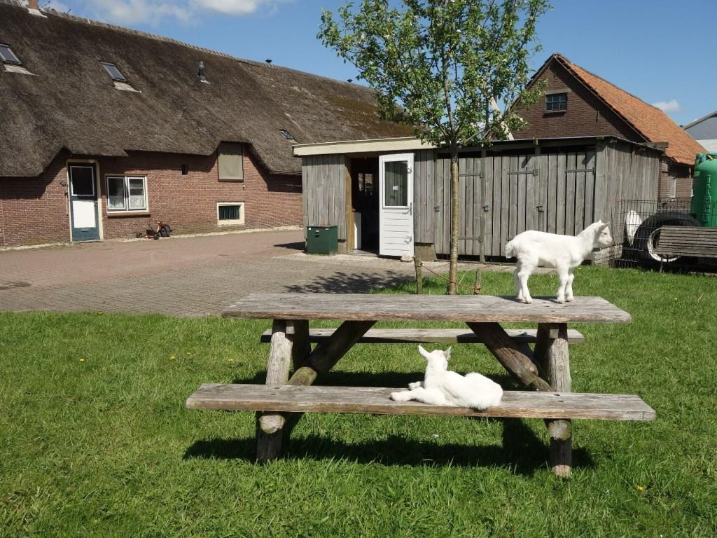 Het rustpunt bij boerderij Welgelegen  © DPG Media