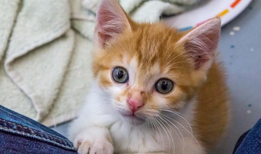 Kittens van alle karakters; van sluwe tijgers tot poezelige knuffelaars, zoeken een fijn thuis.