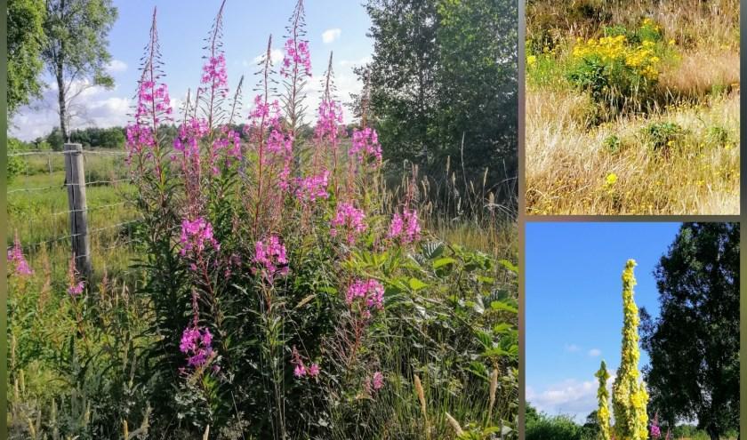 Mooie bloemen op de groevenbeekse heide