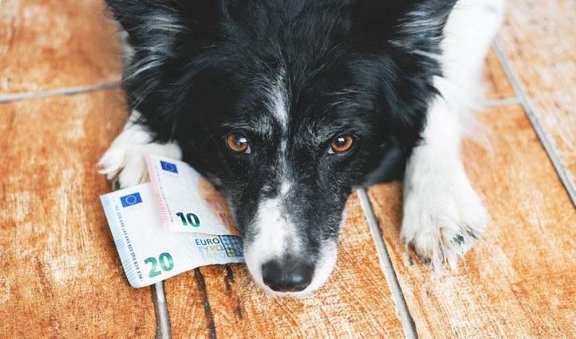 Niels Aussems uit Waalwijk heeft een petitie ingediend tegen de hondenbelasting in Noord-Brabant.