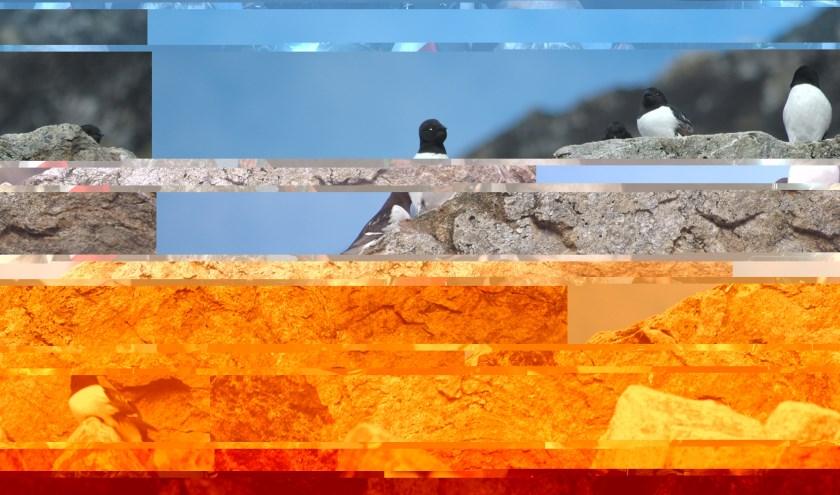 Jenny van Leeuwen en Vincent Vogels zijn oneindig geïnspireerd door kleur en vorm in hun werk.