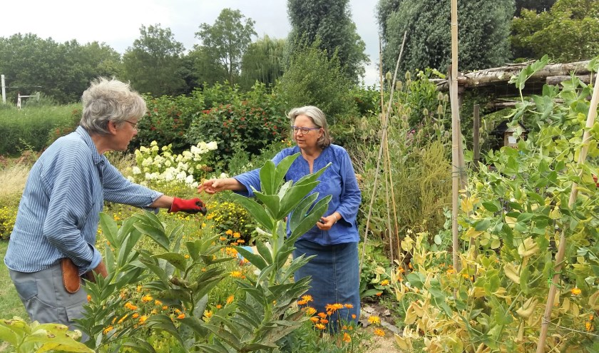 Agnes Jonker en Clarie van den Langenberg van Eetbaar IJsselstein werken in de tuin bij de Hooghe Camp. (Foto: Karin Doornbos)
