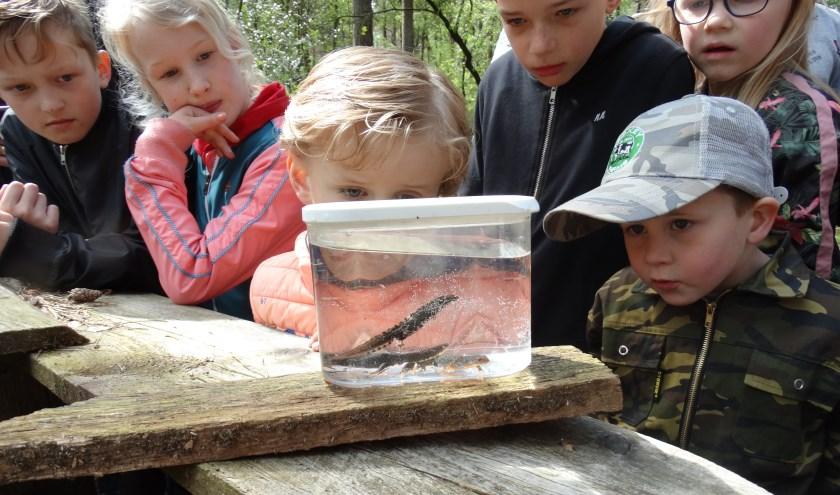 Kinderen kunnen bij de Nature Experience van dichtbij kennismaken met salamanders.