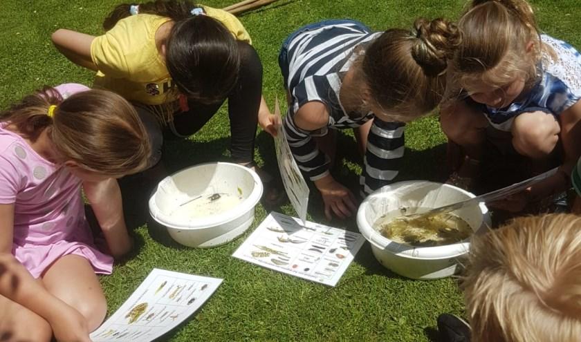 Opperste concentratie bij het determineren van de waterdiertjes die de leerlingen uit de vijver hebben gevist.