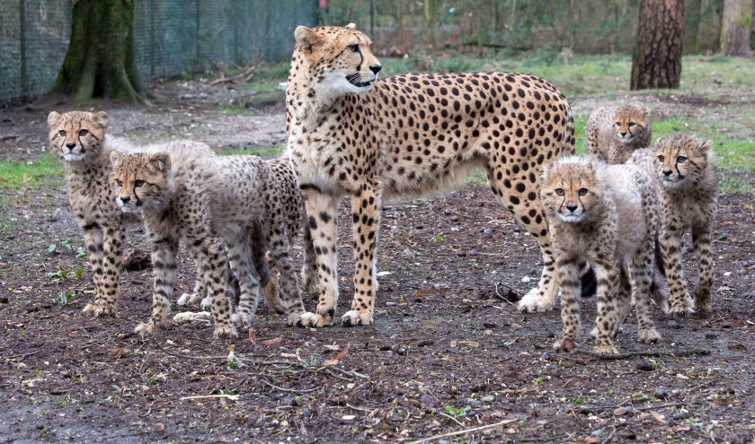 (foto: Koninklijke Burgers' Zoo)