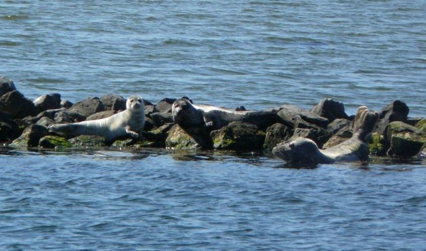 Op zoek naar zeehonden en reeën met boswachter van Staatsbosbeheer. FOTO: Staatsbosbeheer