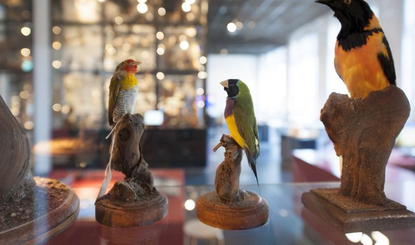 Het museum wordt al jarenlang door kinderen uitgeroepen als kidsproof museum. foto: Maria van der Heyden