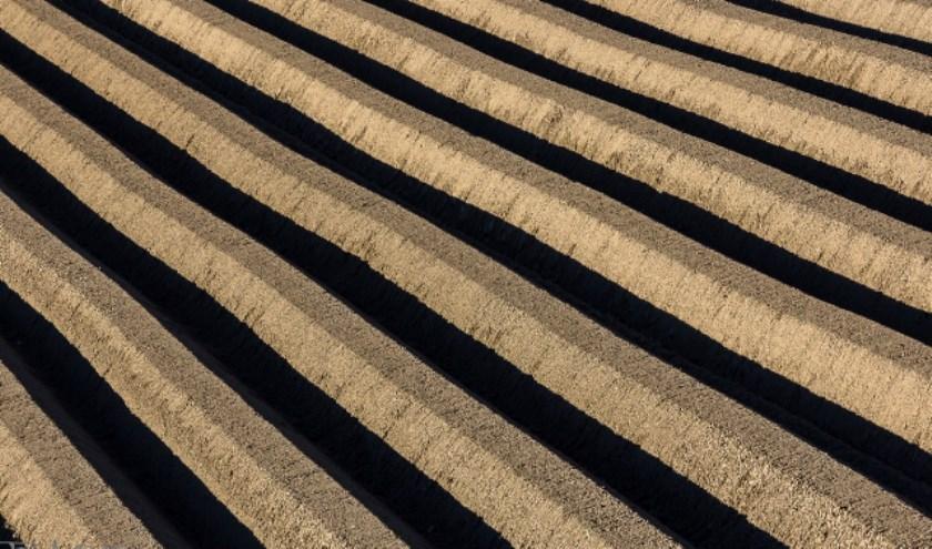 Lijnen en structuren in het Hoeksche Waardse landschap vormen ook een belangrijke bron van inspiratie voor fotograaf Cor Blok. (foto: Cor Blok)