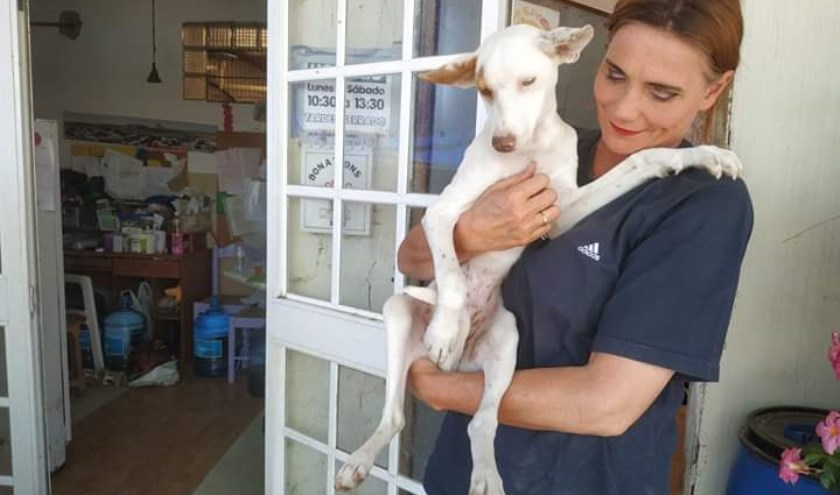 Monique Zwijgers is begaan met het lot van honden in Spaans La Linea. FOTO: Animal in Need.