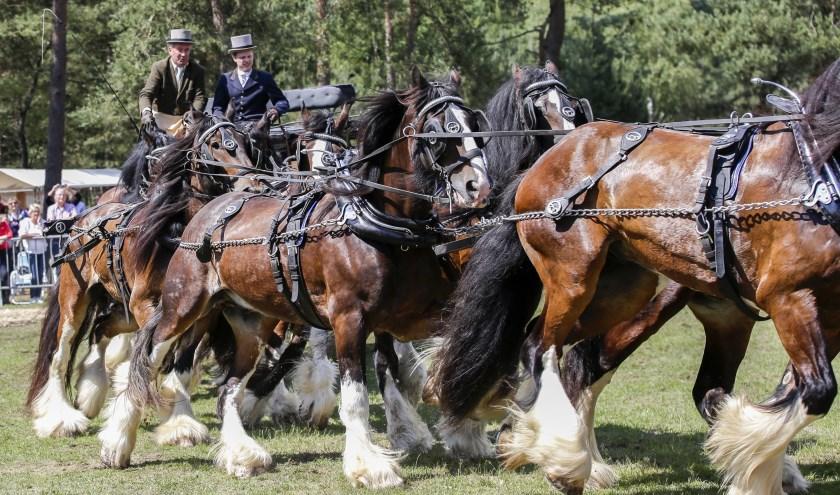 Wouter Hazeleger tijdens het Weekend van het Paard (foto: Peter Lous)