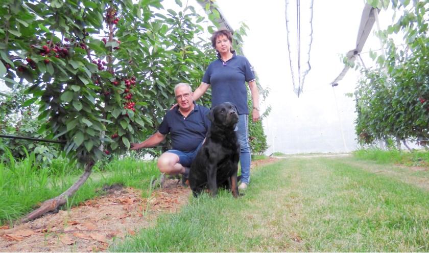 Jos en Margriet Schilderink (en hond Pluto) in de kersengaard waar de Regina-kersen volgens het Upright Fruits Offshoot System groeien.