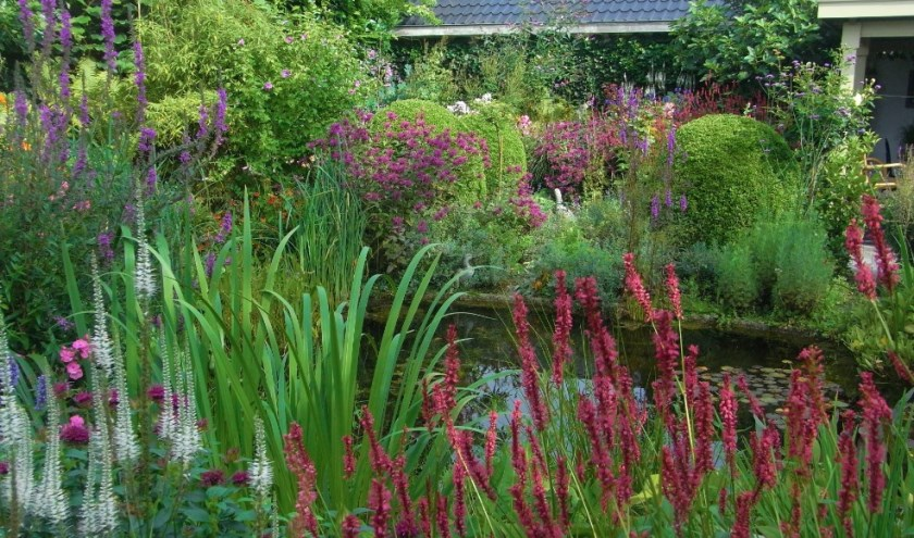 Vooral in juli en augustus is het een bloemenfeest in deze cottagetuin met een diversiteit aan bloeiende planten.