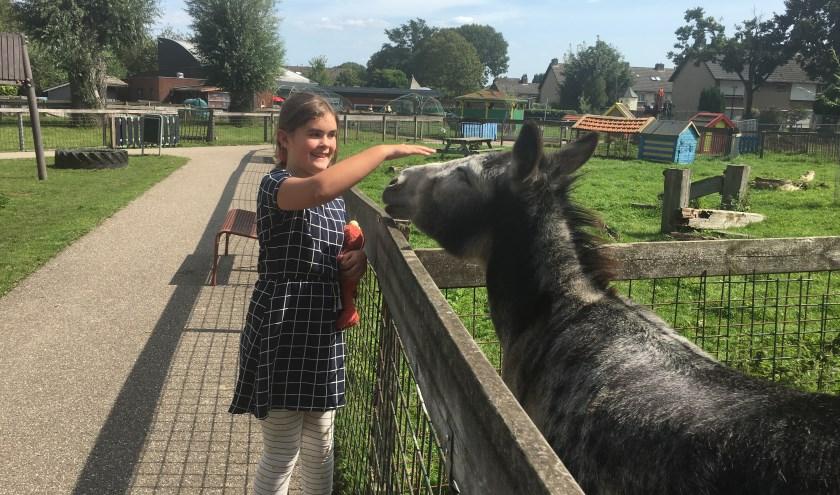 Op 7 september viert de Kromme Akker feest. De kinderboerderij bestaat vijftien jaar. Op de foto aait Birke van Burik de ezel (foto: Judith Prakke)