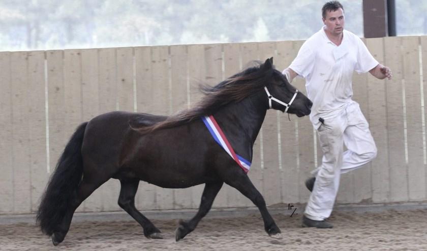 Teun Aleven showt zijn toppony Falatina, die op de regionale keuring de middenmaat won én erekampioen werd.