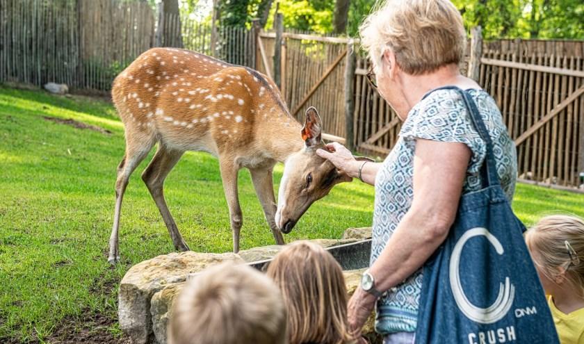 In Tierpark Nordhorn worden de bezoekers hartelijk begroet door de Vietnamese sikaherten; een heel vriendelijke hertensoort. De soort wordt echter ernstig bedreigd. Foto: Frans Frieling