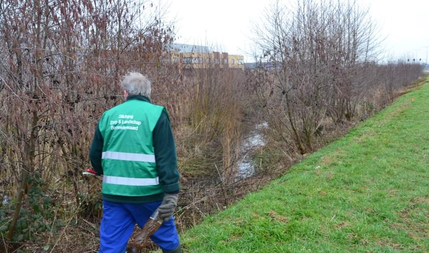 Het Rabattenbos is een van de vergeten stukjes natuur waarover de Stichting Dorp & Landschap Bommelerwaard zich heeft ontfermd.