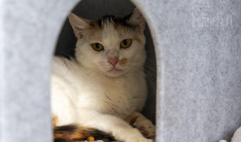 Mindy werd samen met haar kittens gedumpt. Foto: Dierenbescherming.