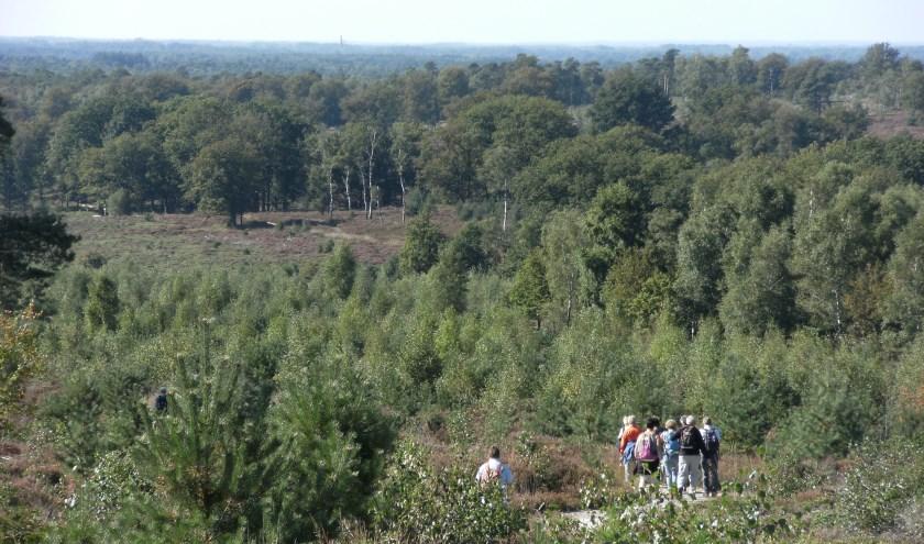 Wandelaars kunnen bij de heidemars een route lopen van 10, 15 of 25 kilometer.  (Foto: Natuurmuseum Holterberg)