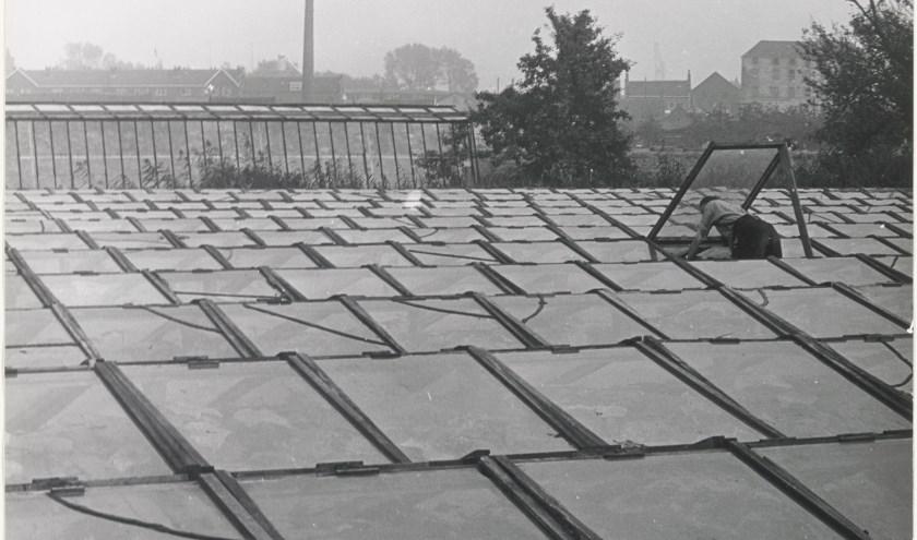 Tuinderij in Walburg in de jaren vijftig ter hoogte van de Cort van der Lindenstraat. Achter het platglas en de kassen is nog bebouwing aan de Ringdijk zichtbaar. Collectie E. Beket (RAD, inv.nr. 947_1083)