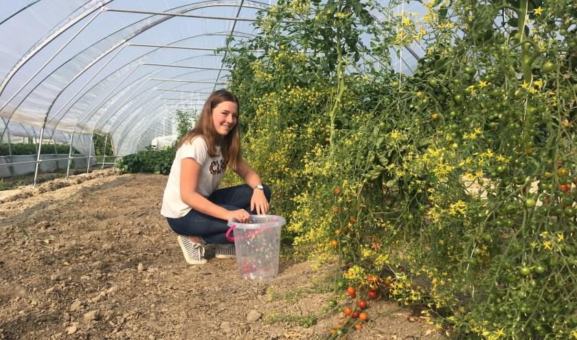 Fleur in haar moestuintunnel waar ze de rode tomaten plukt en haar komkommers worden gezaaid. FOTO: Gerrit van Loon