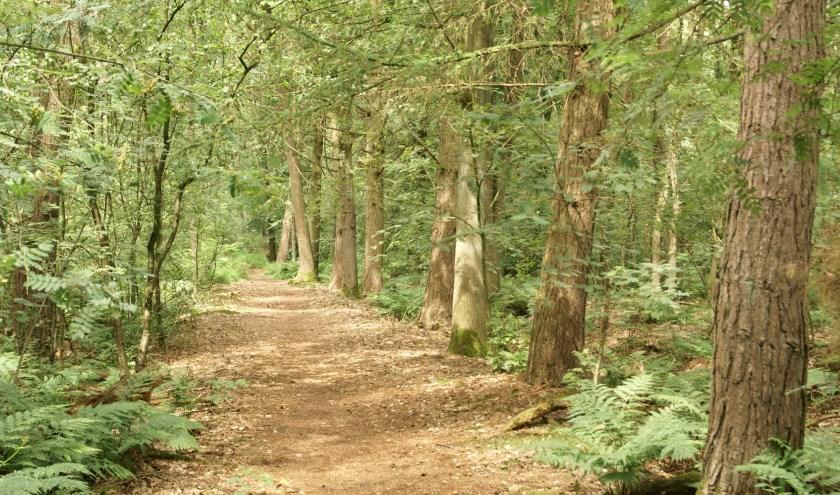 De wandeling staat in het teken van de veranderingen in het bos. FOTO: INV VEV.