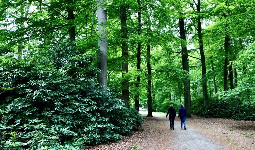 Populair onder wandelaars is de Overijsselse wandelrouteapp. Die is gratis te downloaden. Foto: Cécile Bögels