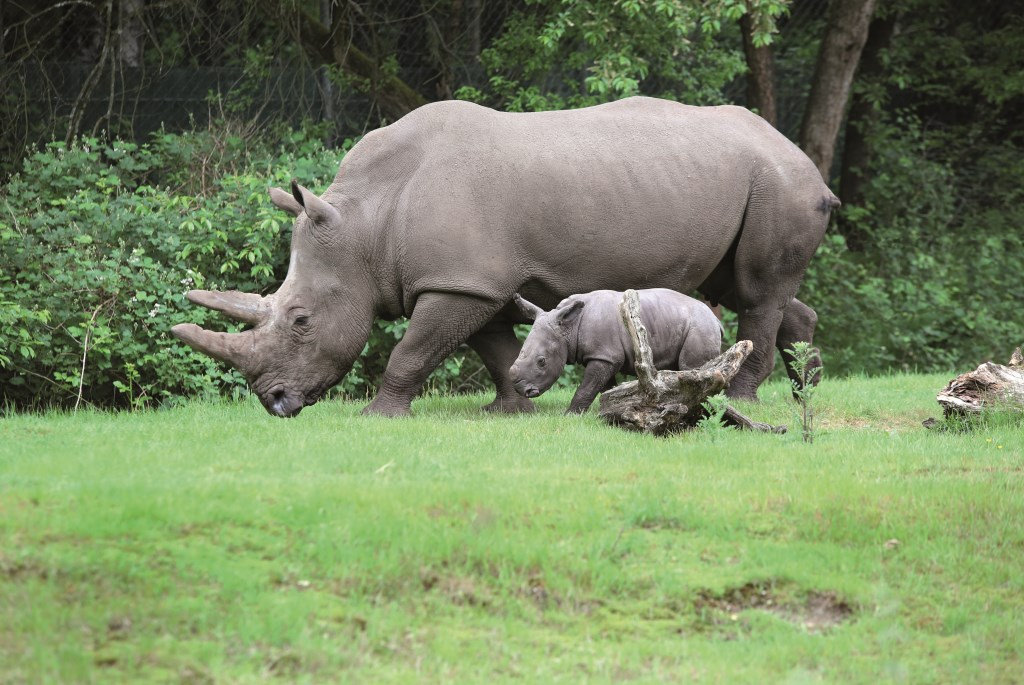 Foto Koninklijke Burgers' Zoo  © DPG Media