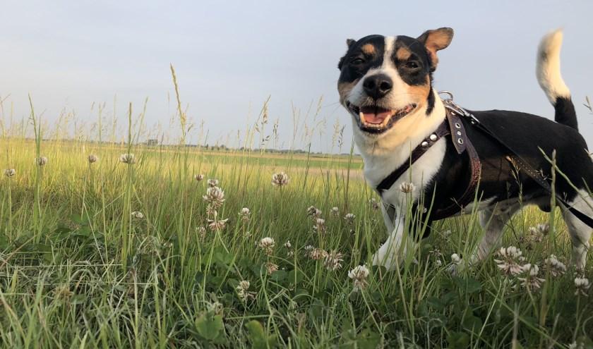 Een locatie waar alleen honden met hun baasjes zijn, of juist samen met andere honden; een hondenutopia. FOTO: Christel van Kuik