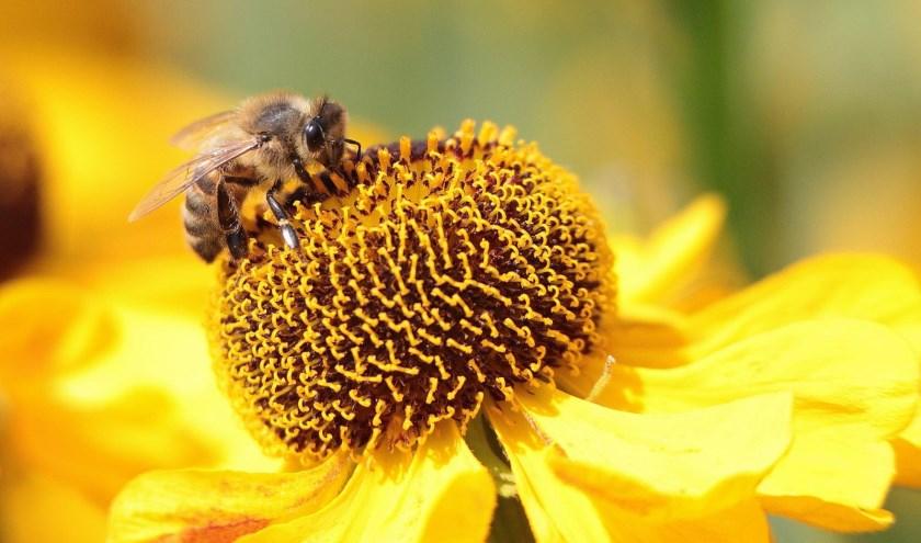 Altijd al meer willen weten over het leven van de honingbij? FOTO: Rini van Lopik