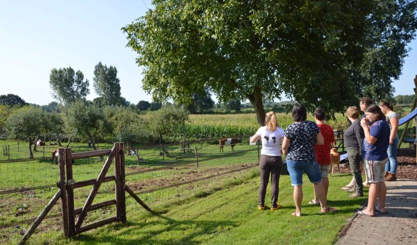Op Lakenvelderboerderij Mariahoeve in Alem wordt zaterdag 7 september'De dag van de Lakenvelder' gehouden.