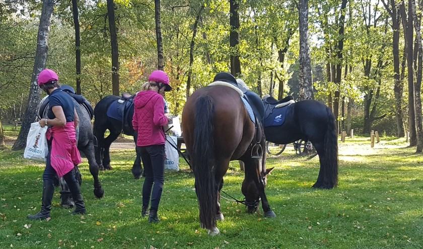 Paarden kunnen voor de start even kennismaken met elkaar.