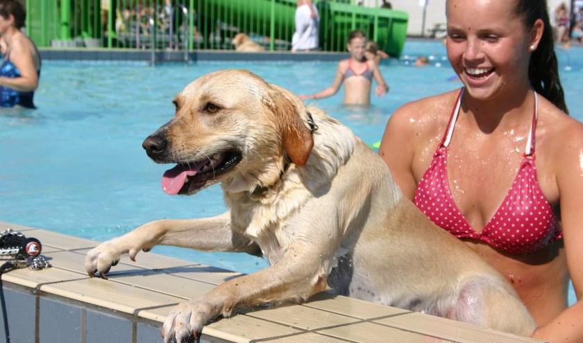 De negende editie van Hondenplons vindt zondag 29 september plaats.