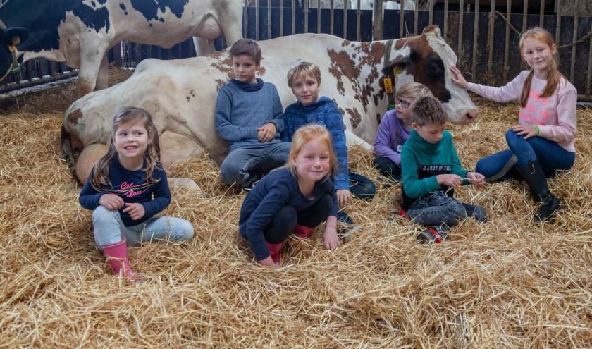 Een paar kinderen mochten zelfs even 'koeknuffelen' met de koe in het strohok.