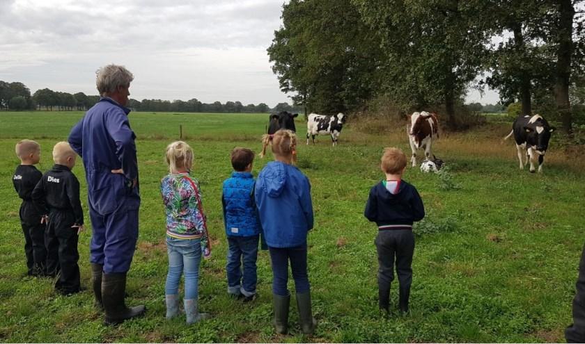 Samen met boer Bennie hebben de kinderen de geboorte van een kalfje van nabij kunnen bekijken.