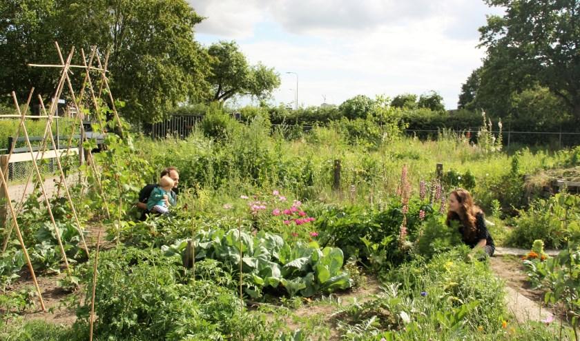 Sigrid, Jorn en hun zoontje Bodo genieten van hun tuin. FOTO: Astrid van Walsem