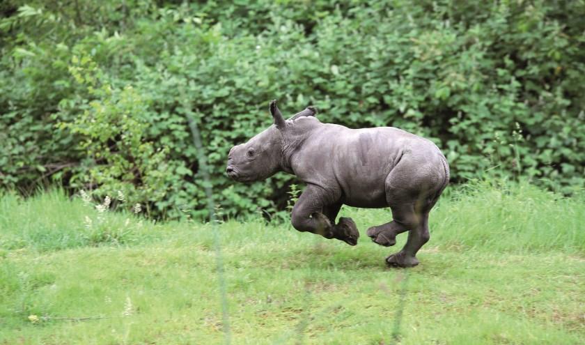 Foto Koninklijke Burgers' Zoo