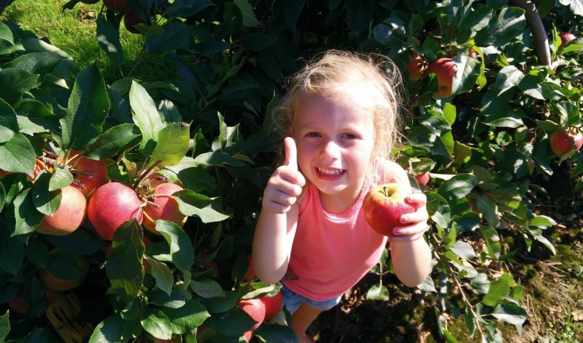 Appels plukken bij zorgboerderij De Buytenhof.