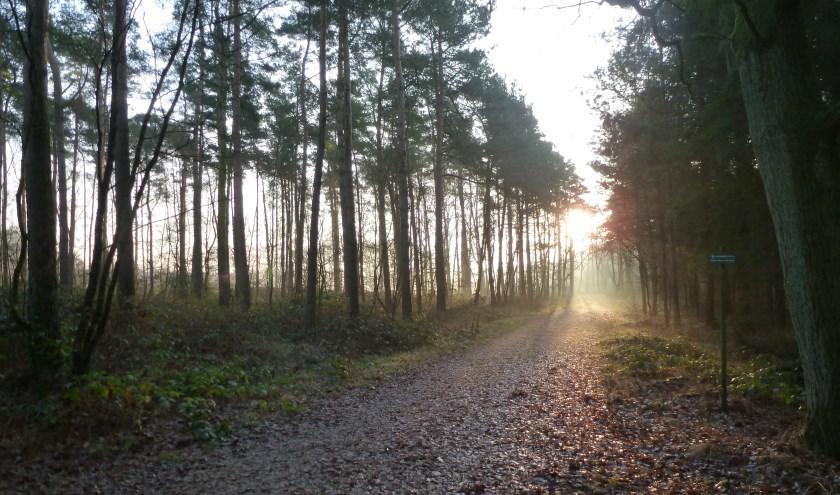 De natuurgids van 't Landkaartje neemt wandelaars mee over landgoederen 't Lutterzand en 't Meuleman.