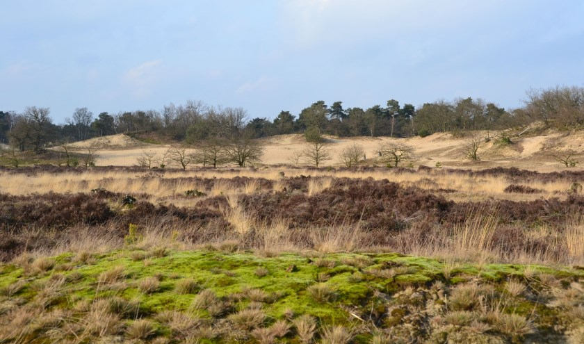 Ga zaterdag mee met de boswachter en ontdek de geschiedenis van de Loonse en Drunense Duinen.