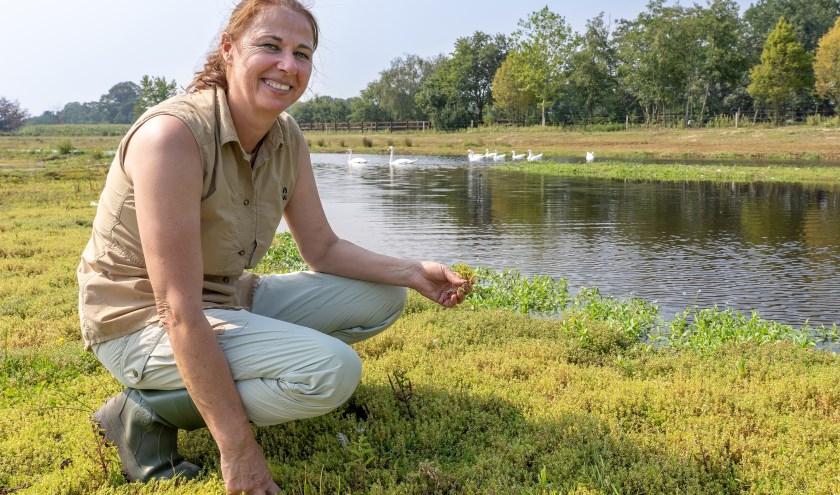 Ecoloog Jeannette van Schaik van Waterschap Vechtstromen voert strijd tegen invasieve exoten zoals de Australische watercrassula. (foto: Paulien Wilkinson)