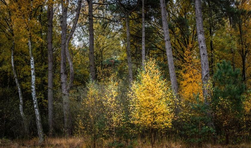 In het gemengde bos is een grotere voedselrijkdom en zijn meer nest- en schuilplekken voor insecten, vogels en zoogdieren.