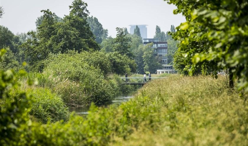De gemeente Den Haag wil bomen meer ruimte geven om goed te groeien.